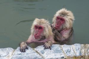 Hot-tubbing monkeys, Hakodate, Hokkaido, Japan, Asia by Michael Runkel