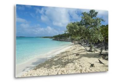 Iguanas on a White Sand Beach, Exumas, Bahamas, West Indies, Caribbean, Central America