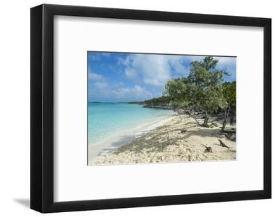 Iguanas on a White Sand Beach, Exumas, Bahamas, West Indies, Caribbean, Central America