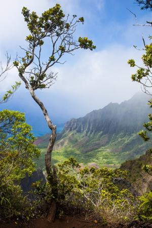 Kalalau Lookout over the Napali Coast from the Kokee State Park by Michael Runkel