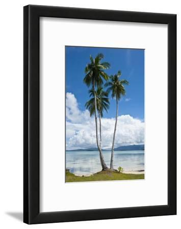 Lonely Palm Tree in the Marovo Lagoon, Solomon Islands, Pacific