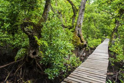 Long pier over a swamp, Kosrae, Federated States of Micronesia, South Pacific by Michael Runkel
