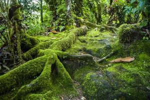 Moss Overgrowing Trees Along a Path by Michael Runkel