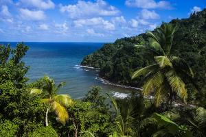Pagua Bay in Dominica, West Indies, Caribbean, Central America by Michael Runkel