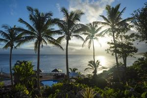 Palm trees in backlight in Niue, South Pacific, Pacific by Michael Runkel