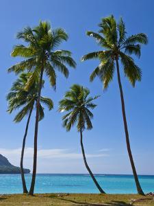 Palm Trees, Port Orly, Island of Espiritu Santo, Vanuatu, South Pacific, Pacific by Michael Runkel
