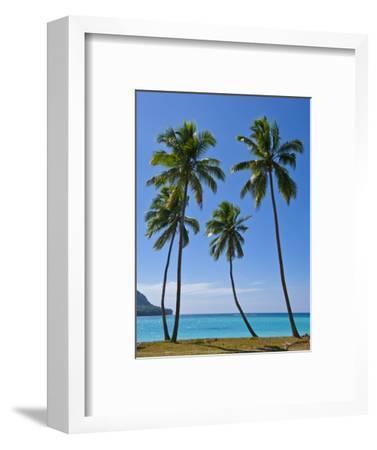 Palm Trees, Port Orly, Island of Espiritu Santo, Vanuatu, South Pacific, Pacific