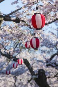 Paper lanterns hanging in the blooming cherry trees, Fort Goryokaku, Hakodate, Hokkaido, Japan, Asi by Michael Runkel