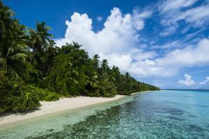 Paradise White Sand Beach in Turquoise Water in the Ant Atoll, Pohnpei, Micronesia by Michael Runkel
