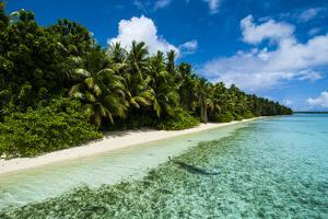 Paradise White Sand Beach in Turquoise Water on Ant Atoll, Pohnpei, Micronesia, Pacific by Michael Runkel