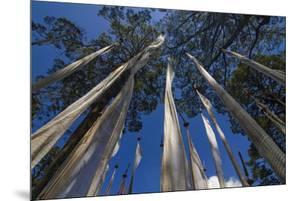 Prayer Flags, Dochula, Bhutan by Michael Runkel
