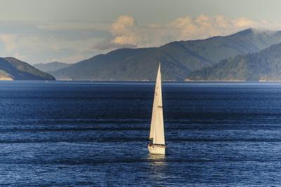Sailing Boat in the Fjords around Picton, Marlborough Region, South Island, New Zealand, Pacific by Michael Runkel