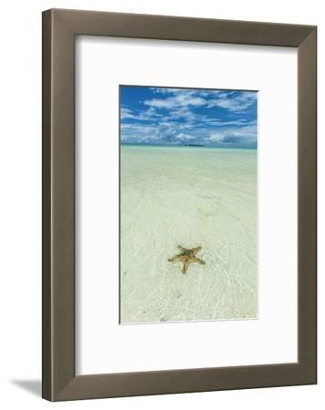Sea Star in the Sand on the Rock Islands, Palau, Central Pacific