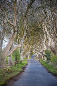 The Dark Hedges in Northern Ireland, Beech Tree Avenue, Northern Ireland, United Kingdom by Michael Runkel