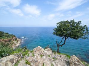 The Turquoise Waters on the Akamas Peninsula, Cyprus, Mediterranean, Europe by Michael Runkel