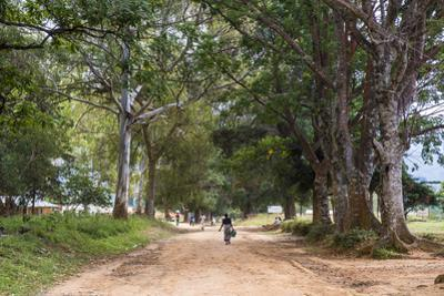 Tree Alley in Livingstonia, Malawi, Africa by Michael Runkel