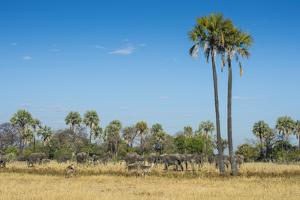 Waterbucks (Kobus Ellipsiprymnus) in Front of African Bush Elephants (Loxodonta Africana) by Michael Runkel