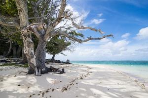 White sand and turquoise water at Laura (Lowrah) beach, Majuro atoll, Majuro, Marshall Islands, Sou by Michael Runkel