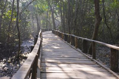 Wooden Boardwalk over Swamps in the UNESCO World Heritage Site Sundarbans, Bangladesh, Asia by Michael Runkel