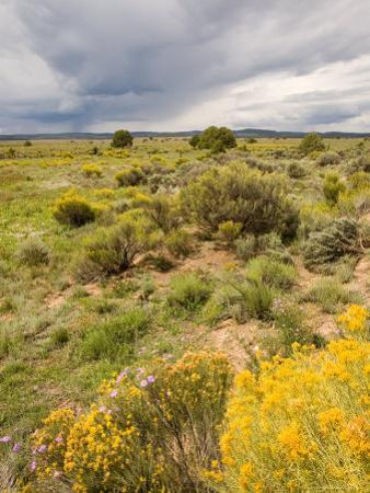 High Desert in Bloom Along Hwy 285 North of Tres Piedras, New Mexico by Michael S^ Lewis