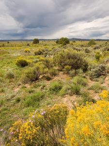 High Desert in Bloom Along Hwy 285 North of Tres Piedras, New Mexico by Michael S. Lewis