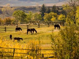 Horses Grazing in the Late Afternoon on the Home Ranch, Colorado by Michael S. Lewis