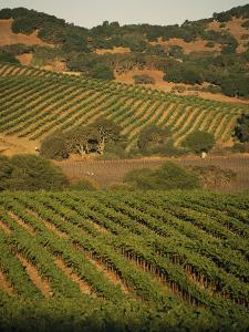 Sonoma County Vineyards, California by Michael S. Lewis