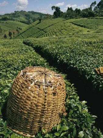 Tea Plantations Covering the Hills Near Mount Kenya by Michael S^ Lewis
