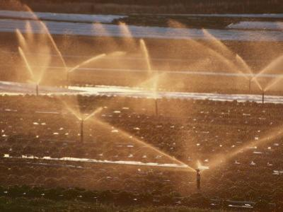 Twilight View of Sprinklers Watering a Strawberry Field by Michael S^ Lewis