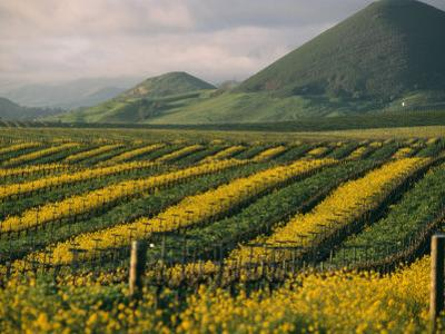 Vineyards in Californias Edna Valley by Michael S^ Lewis