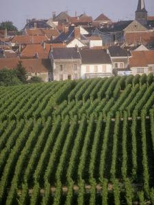 Vineyards in the Champagne Region, France by Michael S. Lewis