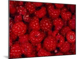 A Pile of Wild Raspberries by Michael S. Quinton