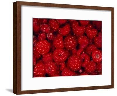 A Pile of Wild Raspberries