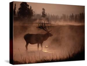 Bull Elk in the Morning in the Smoky Atmosphere of Yellowstone National Park Fires of 1988 by Michael S. Quinton