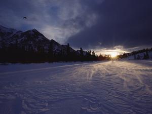 Raven (Corvus Corax) at Sunset, Alaska Range, Alaska by Michael S. Quinton