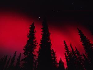 Red Aurora Borealis over Boreal Forest, Alaska by Michael S^ Quinton