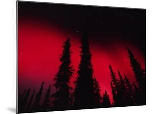 Red Aurora Borealis over Boreal Forest, Alaska by Michael S. Quinton