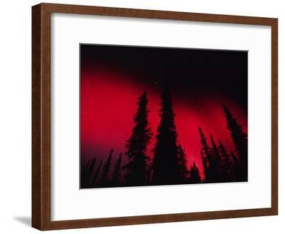 Red Aurora Borealis over Boreal Forest, Alaska