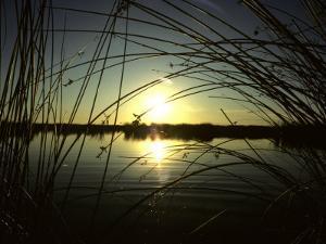 Sunrise Thru the Rushes at Market Lake, Idaho, Market Lake Wildlife Refuge, Idaho by Michael S. Quinton