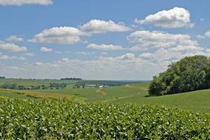 Corn Field, Nebraska, USA by Michael Scheufler