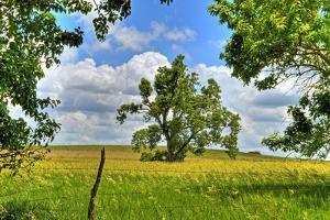 Framed Tree, Kansas, USA by Michael Scheufler