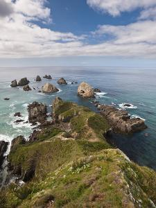 Nugget Point, Otago, South Island, New Zealand, Pacific by Michael Snell