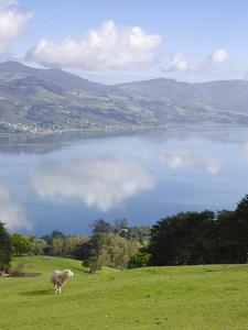 Otago Harbour, Otago Peninsula, Otago, South Island, New Zealand, Pacific by Michael Snell