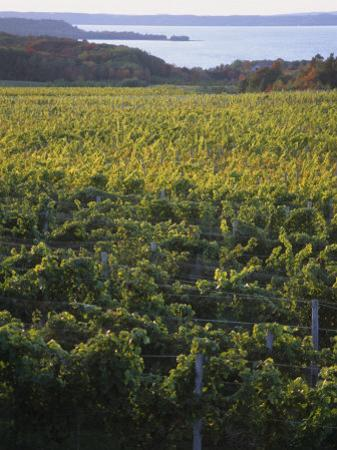 Vineyards Near Traverse City, Michigan, USA by Michael Snell