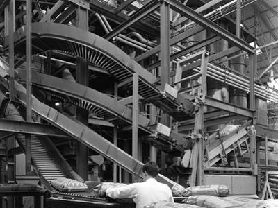 Complex Conveyor Delivery, Spillers Animal Foods, Gainsborough, Lincolnshire, 1962 by Michael Walters