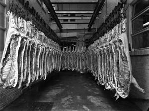Interior of a Butchery Factory, Rawmarsh, South Yorkshire, 1955 by Michael Walters