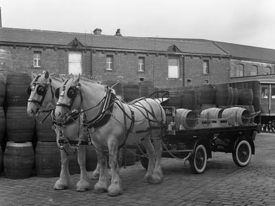 Tetley Shire Horses and Dray, Joshua Tetley Brewery, Leeds, West Yorkshire, 1966