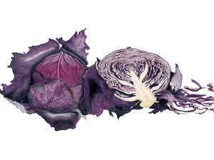 Watercolor Purple Cabbage by Michael Willett