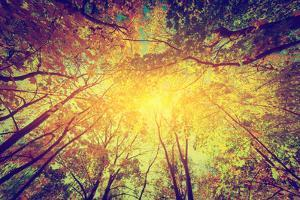 Autumn, Fall Trees. Sun Shining through Colorful Leaves. Vintage Photograph Style by Michal Bednarek