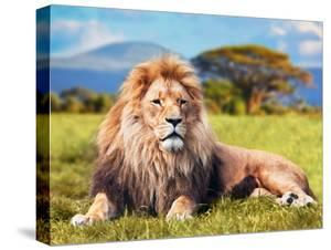 Big Lion Lying on Savannah Grass. Landscape with Characteristic Trees on the Plain and Hills in The by Michal Bednarek